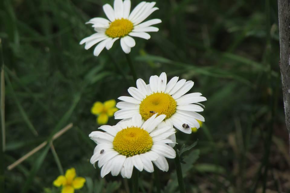 Ջան, ծաղիկ, ջան, ջան