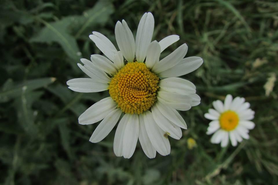 Ջան, ծաղիկ, ջա՜ն, ջա՜ն...